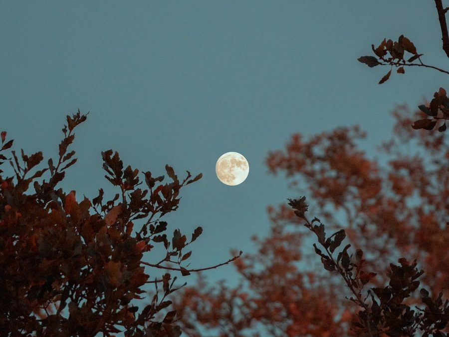 Parasites and the Full Moon